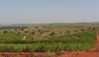 Grupo de 7 Fazendas no Brasil e na Argentina
